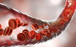 """Tế bào máu của những bệnh nhân ung thư sống sót thần kì có thể được truyền cho bệnh nhân khác với hi vọng giúp họ """"khỏi bệnh"""""""