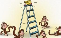 Chuyện nhà khoa học Việt Nam khởi nghiệp sợ mất ý tưởng và hiện tượng tuyệt vọng tích tụ của 5 con khỉ nhốt chung một buồng