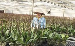 Hiện thực giấc mơ hoa Việt
