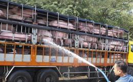 Hải quan sẵn sàng làm ngoài giờ thông quan xuất khẩu thịt lợn