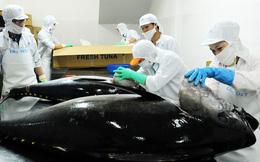 """Dính """"thẻ vàng"""" EU, xuất khẩu cá ngừ chuyển mạnh sang Trung Đông"""