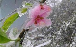 Băng giá xuất hiện tại miền núi Nghệ An, có nơi nhiệt độ xuống 0 độ C