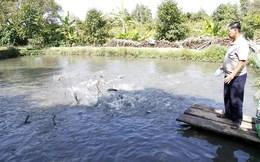 Nông dân dè chừng vì… giá cá tăng