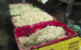 Công khai tẩy trắng bắp chuối bằng hoá chất công nghiệp