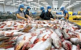 Xuất khẩu cá tra vẫn ổn định