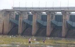 Thủy điện Trị An ngưng xả tràn, hàng trăm người ào ạt bắt cá