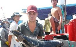 """Lập Tổ công tác khắc phục """"thẻ vàng"""" hải sản xuất khẩu"""