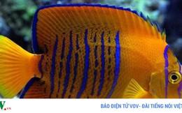 """Những loài cá với mức giá """"cắt cổ"""" trên thế giới"""