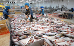 Cá tra Việt Nam sang Mỹ chịu thuế cao nhất là 2,39 USD/kg