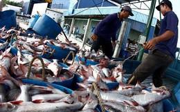 Cẩn trọng trước biến động của giá cá tra