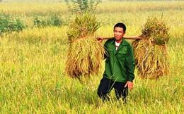 Năm 2017, hạt gạo Việt có giúp nông dân mỉm cười?