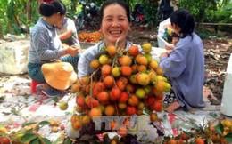 Hơn 27.000 hộ nông dân đạt thu nhập trên 1 tỷ đồng một năm