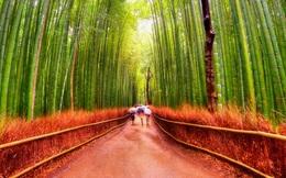 """Liệu pháp """"tắm rừng"""" đặc biệt giúp giảm stress, tăng cường hệ miễn dịch của người Nhật"""
