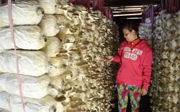 Lãi hơn 30 triệu đồng/tháng từ trồng nấm bào ngư xám