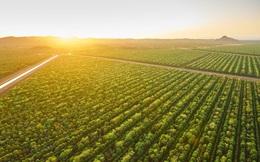 Suốt 15 năm kiên trì trồng duy nhất 1 loại cây, 2 công ty này sắp kiếm cả tấn tiền nhờ bán giá đắt gấp 5 lần bạc