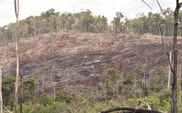 Bắt giám đốc và phó giám đốc để mất hàng ngàn héc ta rừng