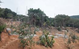 Đà Nẵng báo cáo Thủ tướng về dự án tại Sơn Trà