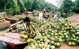 Vừa mua xong công ty mía đường, Vinamilk tiếp tục đầu tư vào doanh nghiệp chế biến dừa Bến Tre