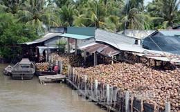 Giá dừa khô ở Trà Vinh tăng cao