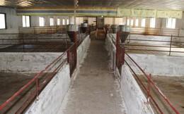 """Giá lợn giảm, nhiều hộ chăn nuôi phải """"treo"""" chuồng"""