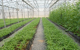 Nông nghiệp công nghệ cao Việt Nam thu hút nhiều nhà đầu tư Nhật Bản