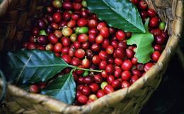 Ấn Độ chính thức bỏ lệnh cấm nhập khẩu nông sản Việt Nam