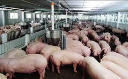 Bộ Công Thương đưa ra nhiều giải pháp cứu ngành chăn nuôi lợn