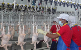 TP.HCM đồng loạt triển khai truy xuất nguồn gốc thịt gia cầm