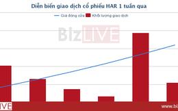 [Cổ phiếu nổi bật tuần] HAR tăng 86% trong 10 phiên, trào lưu ăn theo hay chuyển mình đi lên?
