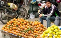 Cam Sành Hà Giang được mùa, rớt giá, người trồng cam 'đánh bạc với giời'!