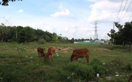 Bám theo dự án sân bay Long Thành: Đất nền bắt đầu nóng sốt