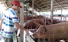 Giá thịt lợn phụ thuộc vào thị trường nội địa