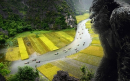"""Quảng bá du lịch Việt Nam với bom tấn """"Kong: Skull Island"""" như thế nào cho hiệu quả?"""