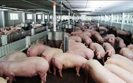 """Bất chấp công cuộc """"giải cứu"""", giá thịt lợn nhiều địa phương vẫn giảm 1.000-4.000 đồng/kg trong tháng 6"""