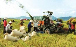 Làm thế nào để đưa thương hiệu gạo Việt ra thế giới?