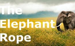 """Câu chuyện """"Trói voi bằng dây thừng"""" và bài học bất kỳ ai muốn thành công cũng phải suy ngẫm"""