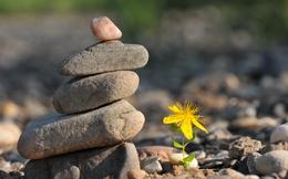 Đức Đạt Lai Lạt Ma giải thích vì sao điều đơn giản này lại là thuốc giải duy nhất cho sự đau khổ