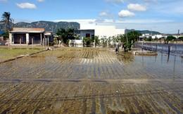 Nông dân Ninh Thuận mất trắng mùa hành Tết