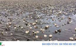 Thủy sản chết hàng loạt ở Kiên Giang chưa rõ nguyên nhân