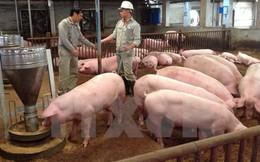 """Bất chấp giá thịt lợn thấp kỷ lục, chăn nuôi gia công vẫn """"sống khỏe"""""""
