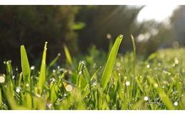 Tư duy nhổ cỏ: Người thành công và kẻ thất bại hơn nhau ngay cả trong những chuyện nhỏ nhất