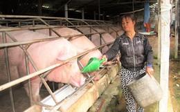 Cận Tết, giá lợn lao dốc vì đâu?