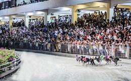 Cho phép người Việt cá cược thể thao: Cần công khai người chơi lớn