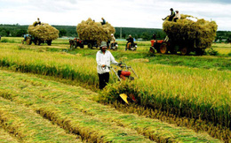 """Có """"2 vòng kim cô"""" cản trở nông nghiệp Việt Nam phát triển"""