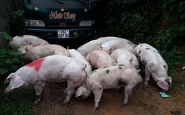 Xuất khẩu lợn tiểu ngạch sang Trung Quốc, con dao hai lưỡi