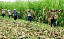 Thành Thành Công Tây Ninh (SBT): LNTT niên độ 2016-2017 đạt 236 tỷ đồng, vượt 16% chỉ tiêu lợi nhuận cả năm