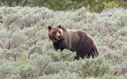 Chuyện 2 bác lái bán da gấu khi...chưa săn được và bài học đắt giá cho dân sales