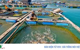 Ủy ban châu Âu sắp thanh tra thủy sản Việt Nam