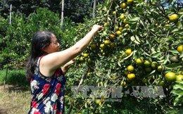 Bí quyết giàu lên nhanh chóng của nông dân Bình Phước