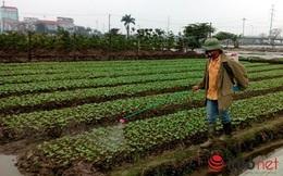 Cho gia hạn nhập khẩu, buôn bán thuốc nguy hiểm, Bộ Nông nghiệp nói gì?